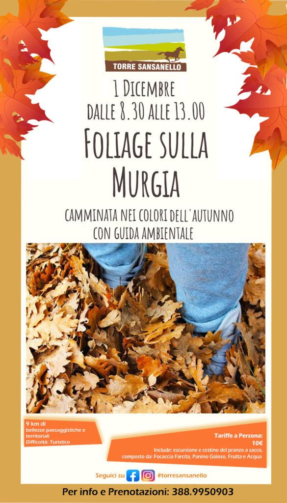 Foliage_TorreSansanello_1dic19